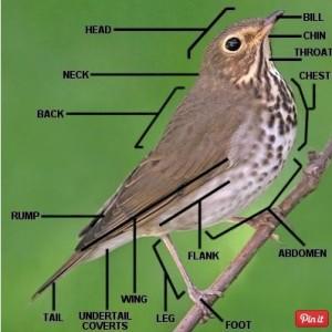 bird-parts-1x